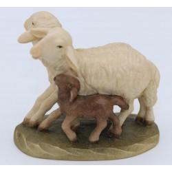 Gruppo pecore Florentiner